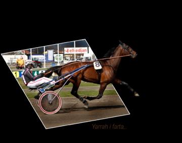 Yarrah Boko (foto og redigering : M.Klette)