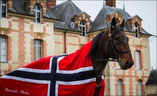 yarrah Foto Eirik Stenhaug Equus Media